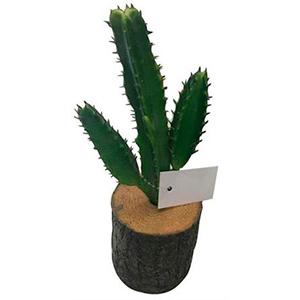 Maceta diseño tronco con cactus