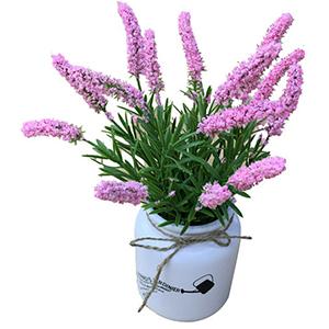 Maceta de ceramica diseño frasco con cola de zorro rosa