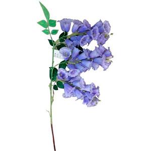 Vara con flores de campanitas moradas