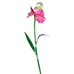 Vara con flores rosas con hojas