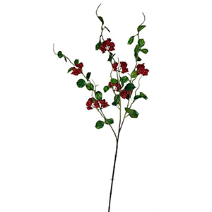 Vara con hojas y berries rojas