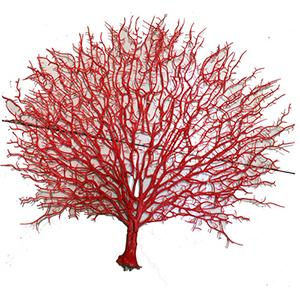 Planta de plastici roja diseño coral