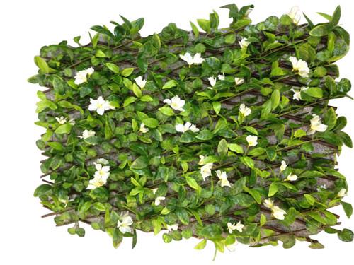 Cerca de 1.2m con flores blancas y follaje verde