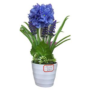 Macetita con Hortencia azul