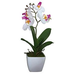 Macetita con Orquidea blanca