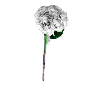 Vara de Hortencia blanca