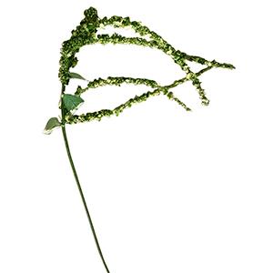 Vara con moras colgantes verdes