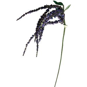 Vara con moras colgantes lilas