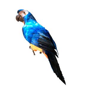 Guacamalla azul