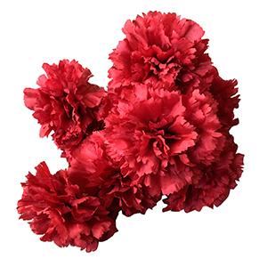 Ramo de claveles rojos