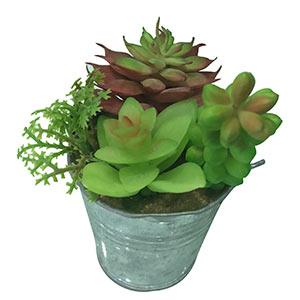 Planta en maceta diseño cubeta