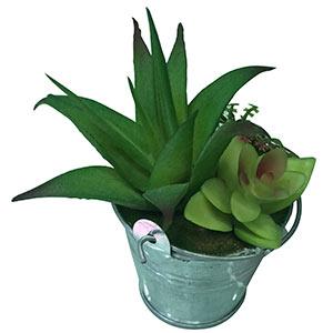 Aloe en maceta diseño cubeta